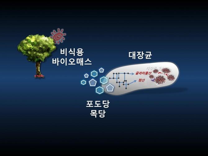 이상엽 KAIST 교수팀이 개발한 시스템대사공학 기법을 이용해 미생물인 대장균에서 의료용 고분자 물질인 '폴리락테이트-co-글라이콜레이트(PLGA)'을 생산하는 모식도. - KAIST 제공